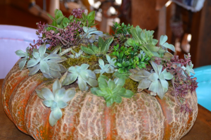 One of a kind pumkins with succulents  Fall in Alpine, TX | PETAL PUSHERS