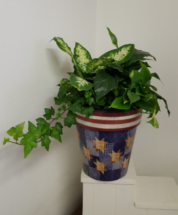 One of a Kind Red White and Blue planter Live indoor green plants
