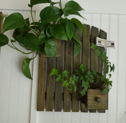one of a kind Wall hanging  Planter with an indoor plant
