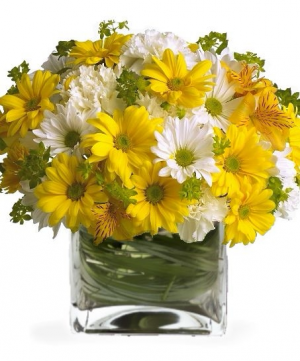 Oopsy Daisies Vase Arrangement in Lebanon, NH | LEBANON GARDEN OF EDEN FLORAL SHOP