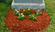 OPTION 2 MIXED BEDDING PLANTS