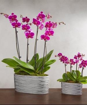 Opulent Orchids  in Arlington, TX | Erinn's Creations Florist