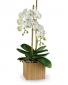 Opulent Orchids $89.99 SALE! was $110.99 Orchid
