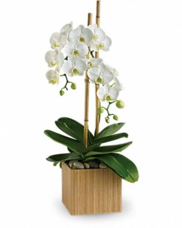 Opulent Orchids T98-2 11.5