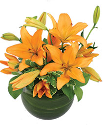 Orange Lily Bowl Arrangement