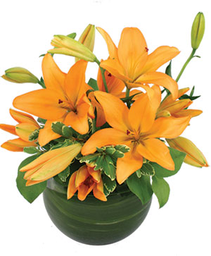 Orange Lily Bowl Arrangement in Cary, NC | GCG FLOWER & PLANT DESIGN