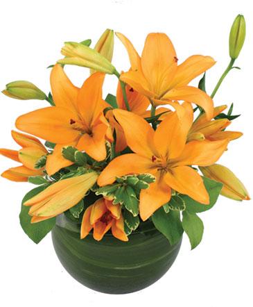 Orange Lily Bowl Arrangement