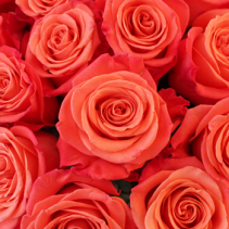 Orange Crush Roses Available in Half Dozen, Dozen and Two Dozen