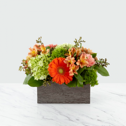 Orange Dreams arrangement