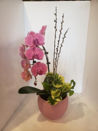 Orange Orchid Arrangement Planter