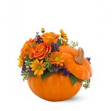 Orange pumpkin  Thanksgiving