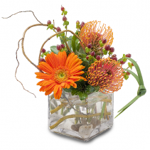 Orange Rocks Arrangement