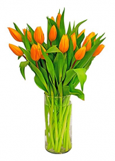 Orange/PINK/YELLOW/PURPLE tulip  COLORS MAY VARY