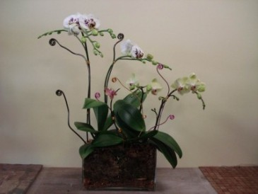 ORCHID 04