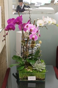 ORCHID 05