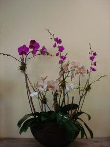 ORCHID 07