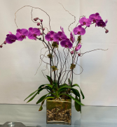 Orchid-2021