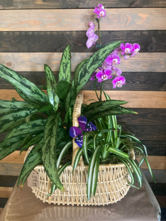 Orchid and Plant Basket Live plants