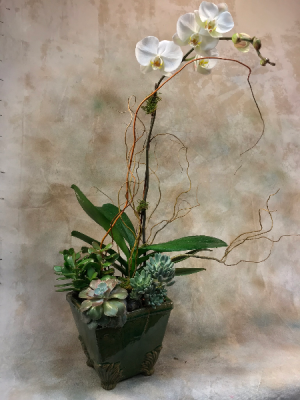 Orchid and Succulent Garden   in Teaneck, NJ | TIGER LILY