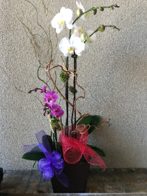 Mini and Me Orchid Arrangement