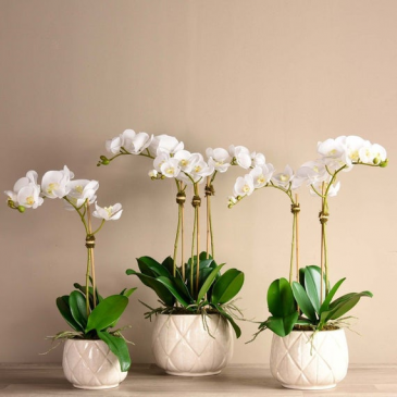 Orchid Arrangement  Artificial