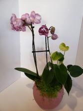 Orchid arrangement Planter