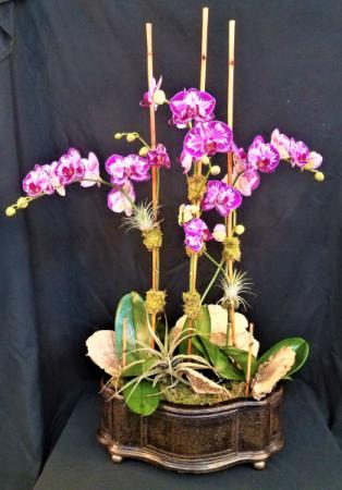 Orchid Art  Plant