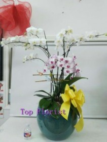 Orchid - big arrangement  Orchid - big arrangement