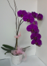 Tropical Beauty vase of orchids