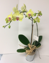 Orchid Blooming plant