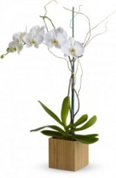 Orchid Box Container