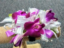 Tropical Beauty Orchid Corsage