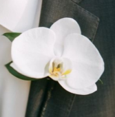 ORCHID CORSAGE ELEGANT MIXTURE OF FLOWERS