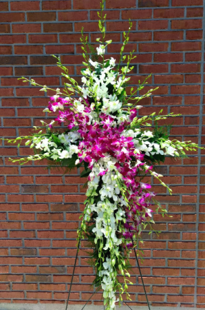 Orchid Cross  in Melbourne, FL | VIOLETS IN BLOOM