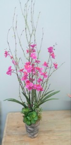 Orchid Dendrobium orchid