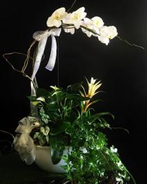 Orchid dish garden
