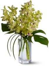 Orchid Elegance Beautiful Presentation