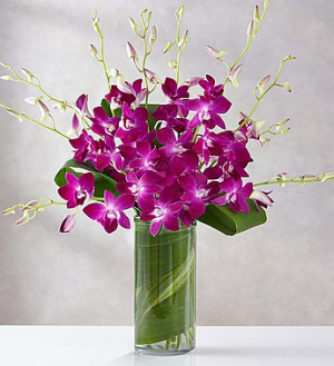 Orchid Embrace™ Arrangement in Croton On Hudson, NY | Cooke's Little Shoppe Of Flowers