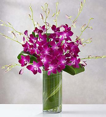 Orchid Embrace™ - Purple Arrangement