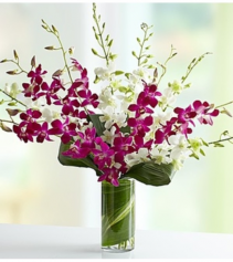 Orchid Embrace™ - Mixed Arrangement