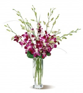 Orchid Embrace tropical for everyday
