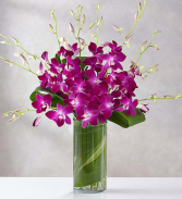 Orchid Embrace Now  Vase