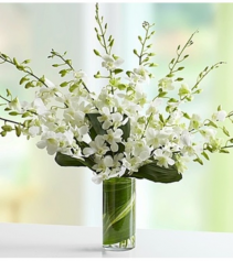 Orchid Embrace™ - White Arrangement