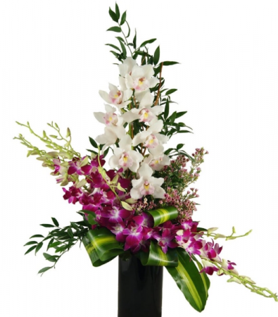 ORCHID EXCLUSIVE ANY LIFE CELEBRATION