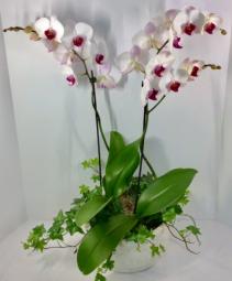 Orchid & Ivy Garden