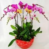 Orchid Garden Blooming Plants