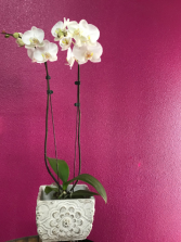 Orchid in a ceramic container