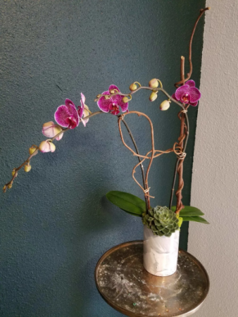 Orchid in Bloom plant