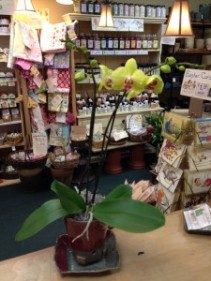 Orchid in Locally Made Pottery with Saucer Plant & Pottery