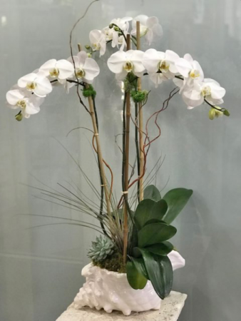 orchid in shell plants